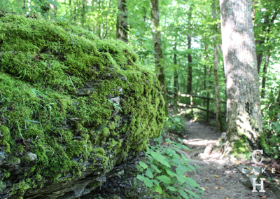 best hiking trails tennessee