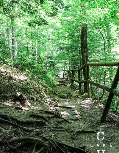 trails to hike tennessee